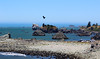 Crescent City Harbor, California, July 2015 (Northwest Lovers) Tags: california highway1 northcoast