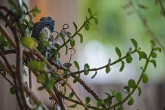 Garden Pot (ACEZandEIGHTZ) Tags: pot nikon d3200 succulent bokeh saariysqualitypictures portulcaria afra variegata plant decoration garden