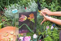 Tulip lumen print (julesnene) Tags: california flower juliasumangil plant sunprint alternativephotography art backyard botanical flowers julesnene lumen lumenart lumenprint paintedbythesun photogram process tulip