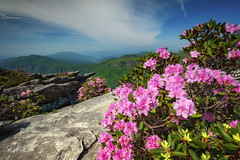 Hawksbill Mountain with Spring Blooms (Reid Northrup) Tags: rrs nature clouds forest hawksbillmountain landscape linvillegorge mountain nikon northcarolina rhododendrons rocks trees reidnorthrup
