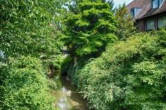 Münster 2018 (22_Juli)_0463b (inextremo96) Tags: münster botanischergarten muenster westfalen widertäufer lamberti aegidien dom kirche church germany mittelalter darkage kiepenkerl