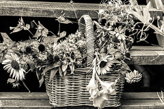 ..I left them on the stairs for you.. (dawn.tranter) Tags: dawntranter monochrome blackwhite 7dwf flowers basket garden stairs