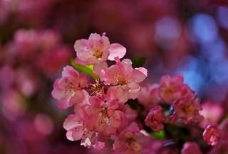 flower 1521