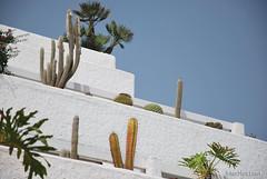 Playa de las Américas, Тенеріфе, Канарські острови  InterNetri  821