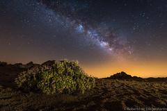 Flores y estrellas. (Roberto_48) Tags: via lactea centro tenerife noche nocturna larga exposicion estrellas ngc