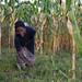 Sadile Wolkeba weeding QPM maize demo plot on her field