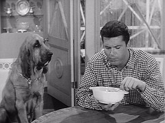"Max Baer with Dog, The Beverly Hillbillies, ""Elly Starts to School,"" 1963 (classic_film) Tags: thebeverlyhillbillies 1963 sixties tv 1960s television hollywood usa unitedstates época ephemeral entertainment classic clásico añejo alt american america nostalgia nostalgic maxbaer man actor aktor akteur acteur maxbaerjr dog animal old comedy sitcom situationcomedy celebrity california blackandwhite monochrome"