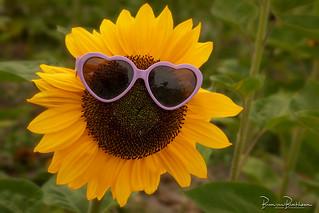 Sunflower 🌻🌻🌻