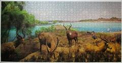 Upper Nile River Delta Diorama (pefkosmad) Tags: jigsaw puzzle hobby leisure pastime complete used secondhand pomegranate uppernileriverdiorama americanmuseumofnaturalhistory