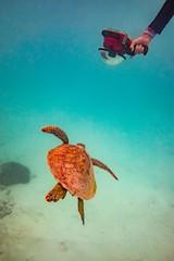 Heron Island Turtle-15 (Quick Shot Photos) Tags: aquatechimagingsolutions canon canoncollective heronisland padi queensland scuba underwater snorkel bogie australia au