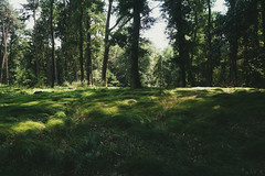 (a└3 X) Tags: natur nature alexander alexfenzl olympus sonne licht wald österreich landscape outdoors color tree bäume wildlife 3x linz a└3x