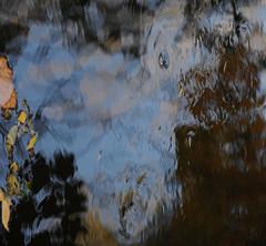"""""""Alors on danse"""" / """"so we danse"""" (Claude Duboille) Tags: eau water reflets refletsdanseau reflections refflectionsinwater portrait portraitinthewater creative creativeimage artisticphotography photographieartistique colors bleu blue couleurs claudeduboille photographer oeil eye forme shape nature natur"""