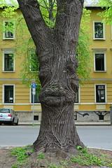 Baum mit Gesicht (manni0656) Tags: weimar baum gesicht face