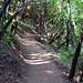 Mt. Umunhum Trail (1)