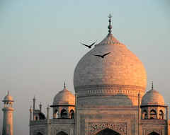 two birds flying over taj mahal (kexi) Tags: agra india asia uttarpradesh tajmahal 2 two pair birds flying monument tomb famous love memorial worldfamous history mughal ancient domes architecture samsung wb690 february 2017 sky blue pink morning instantfave