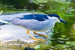 IMG_7910 (nitinpatel2) Tags: bird nature nitinpatel