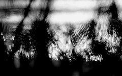 Water's edge (Zara.B) Tags: bw monochrome blackandwhite water light dark bokeh abstract patterns hmbt