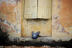 this dove tries to get into the house from the half-open window. (christinehag) Tags: παράθυρο περιστέρια windows fenêtres old house bird doves pigeons