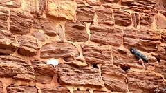 Cours interieur du château (sergeb.) Tags: murs muraille pierre chateau architecture castelnaubretenoux