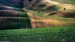 Campagna (SDB79) Tags: molise ururi campagna grano terra colline paesaggio