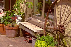 Broken Bench (creepingvinesimages) Tags: hbm bench antiques shop storefront wagon wheelrustcolorsoutdoorsthomaswest virginia nikon d7000 pse14 topaz