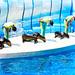 At the Dolphins and Sea Lions Show of Enoshima Aquarium, Fujisawa : イルカとアシカのショー(藤沢市・新江ノ島水族館)