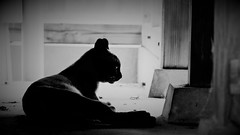 alone (Sat Sue) Tags: gx7mk2 gx80 gx85 japan fukuoka alley cat