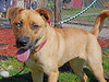 Lovey (2) (AbbyB.) Tags: dog canine rescue adopt animal shelter pet mtpleasantanimalshelter easthanovernj petphotography shelterpet