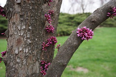 Donald J. Hall Sculpture Park at the Nelson-Atkins Museum - Travel to Kansas City, MO, April 2018 (JenniferHuber) Tags: travel kansascity