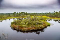 Männikjärve raba õpperada (eglerekand) Tags: bog nature summer estonia water