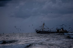 good night (Wöwwesch) Tags: night blue fishing boat sea seagulls water light ocean shoreline dark waves