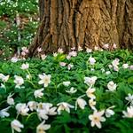 Willkommen Frühling / welcome spring thumbnail