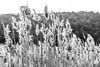 _DSF5737-BR.jpg (Jota Uve) Tags: españa labalsa valdemorosierra europa cuenca castillalamancha cascada