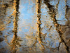 River Reflections (LupaImages) Tags: reflections river water stream wet morning sun spring bark nature soft glow outdoors outside