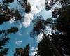 .. black forest sky! (m_laRs_k) Tags: trekking wandern hiking schwarzwald blackforest superwide 714 olympus omd 7dwf landscape sky wood trees forest nationalpark kaltenbronn mannslohweg wildsee
