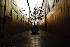 at dusk (Sat Sue) Tags: gx7mk2 gx80 gx85 japan fukuoka marinoa city