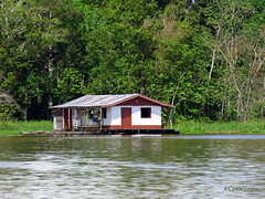 Amazonia (Graça Vargas) Tags: ©2018graçavargasallrightsreserved graçavargas amazonas manaus rio river