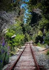 Abandoned Tracks (CDay DaytimeStudios w/1,000,000 views) Tags: ca california forest pacificcoast railroadtracks santacruzcounty seascape winter