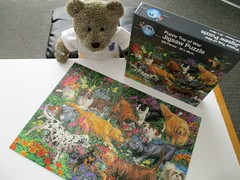 Soppy, soppy, SOPPY!!! (pefkosmad) Tags: jigsaw puzzle hobby leisure pastime complete secondhand used 500pieces tedricstudmuffin teddy ted animal toy cute cuddly fluffy plush stuffed soft puppytugofwar puzzleworld