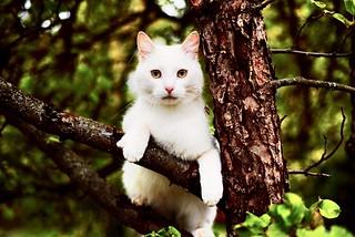 Impudent cat
