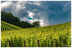 Menace sur les vignes (Pascale_seg) Tags: paysage landscape vignoble verdure vert green moselle lorraine grandest france côteaux printemps spring earth terre nature nuage cloud cloudy nuageux orage gris grey vigne groupenuagesetciel