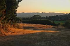 Golden (Deepgreen2009) Tags: drought burnt garden home dry surrey field hills dorking summer parched hot sunset glow golden