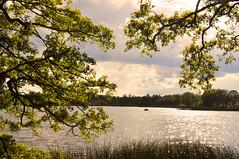 Swedish summer (DameBoudicca) Tags: sweden sverige schweden suecia suède svezia スウェーデン sävsjö småland summer sommar sommer été verano estate 夏 なつ lake sjö see lago lac 湖