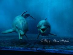 Ladies (Clara - Clerss Malisha) Tags: delfini dolphins delfino dolphin dauphin dauphins delfinodalnasoabottiglia dolphinplays delphin cute cetacei cetaceans cetaceo cetacean captivity cattività cetaceos cautiverio cucciolo cucciola love lovely mammal mammals mammifero mammiferi marinemammals marine mother madre italy italia intelligent interaction intelligenti interazione interactions intelligente animal animals animale animali acquariodigenova aquarium aquariumofgenoa genova genoa liguria north northitaly