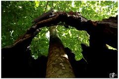 the new in the old (Johannes Haupt) Tags: dasneueimalten baumstamm holz baum rinde loch rahmen sommer grün wörlitz wörlitzerpark thenewintheold treetrunk wood tree bark hole frame summer green