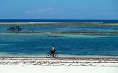 Ich denke gerade über meinen nächsten Urlaub nach /I am just thinking about my next vacation (sabine1955) Tags: sabine1955 kenya mombasa dianibeach beach bike fahrrad ozean türkis weiss bicycle