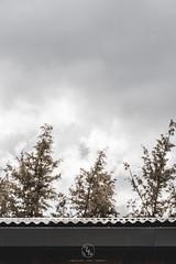 Refugio modular en la dehesa (ruheca | Fotografia de Arquitectura y mucho +) Tags: residencial villabáñez 2018 arquitectura española castilla y leon valladolid villanueva de duero vivienda unifamiliar architecture photography contexto entrearquitectura españa fotografia house implantacion javier arias moderna spain susana garrido wwwentrearquitecturacom cielo hierba edificio modular prefabricada