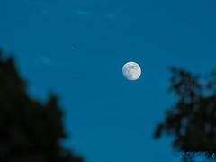 Sending My Dreams To The Moon (Brian D' Rozario) Tags: brian19869 briandrozario nikon d750 70300mm 70300 telephoto moon plane evening bluehour flight sky bluesky waxinggibbous urban sundown reachout transport transportation milehigh horizon reach parallel