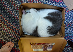 cat in box photo 1,586 (just another drop out?) Tags: cat shoebox