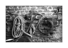Fed NKVD ;/) (schyter) Tags: фэд1 fed1 nkvd 1937 lens film pellicola fomapan 100 80iso sverdlovsk4 sovietlightmeter development adox adonal 137 20 °c homemade scanned epson v600 analogica analogic bw bn bianconero blackwithe 135 35mm homemadescanned allaperto basiasco lodigiano lodi analogicait bianco e nero monocromo